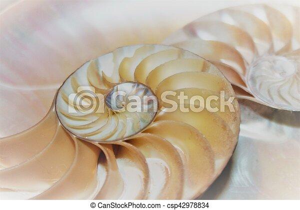 nautile, modèle, section, croix, coquille, fibonacci, mer - csp42978834
