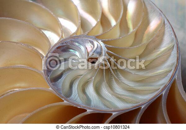 nautile, spirale - csp10801324