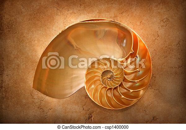 Nautilus chamuscado - csp1400000