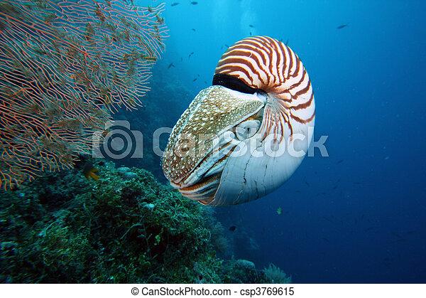 Nautilus - csp3769615
