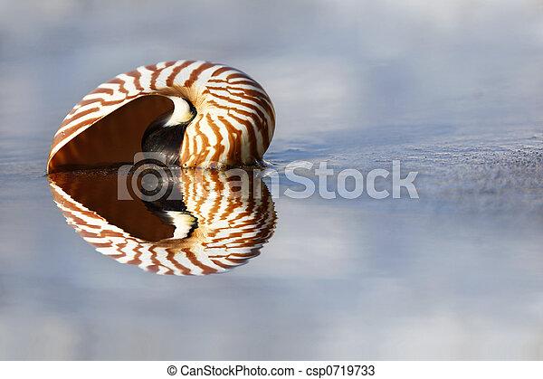 Nautilus de playa - csp0719733