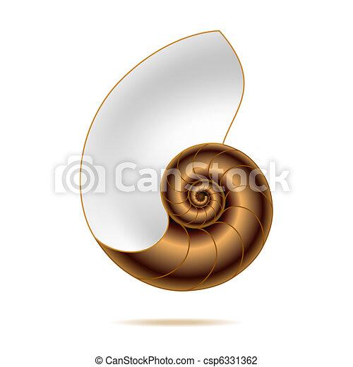 Nautilus Shell Drawing
