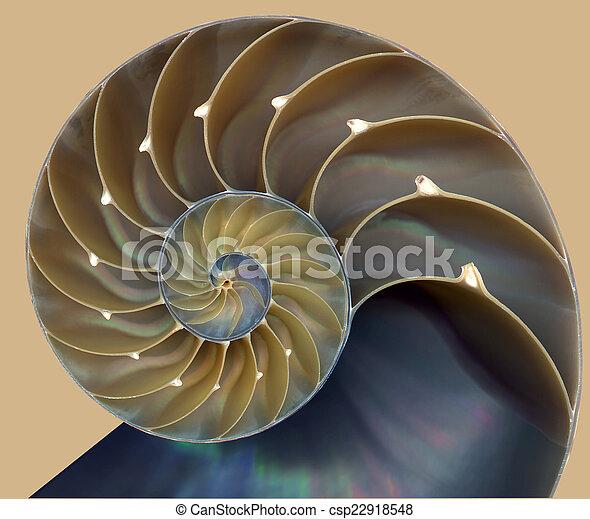 Nautilus shell pattern - csp22918548
