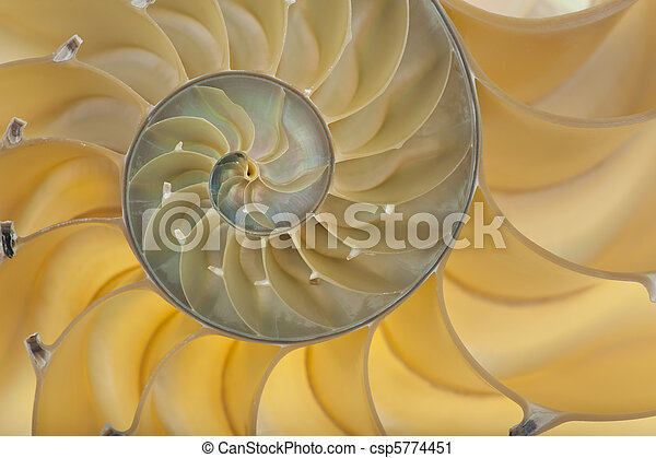 Nautilus shell - csp5774451