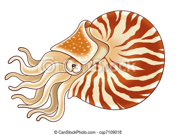 Nautilus - csp7109018