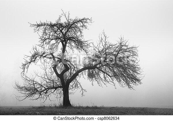 nebbia, albero, mela - csp8062634