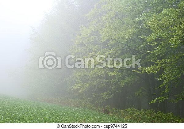 nebbia, foresta - csp9744125
