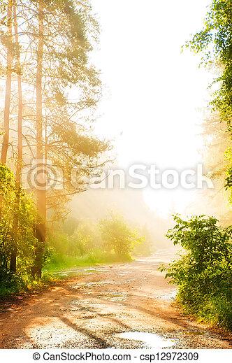 nebbia, foresta, strada - csp12972309