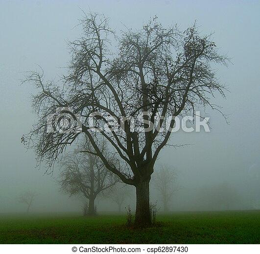 nebbia, mela, albero - csp62897430