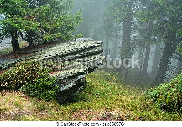 Felsen im Nebel des Waldes - csp8565764