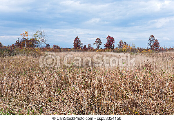 Necedah Prairie and Savanna Environs - csp53324158