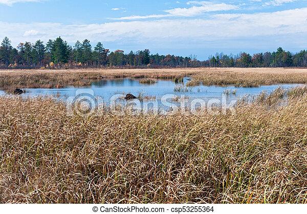Necedah Sedge Meadow Wetlands and Forest - csp53255364