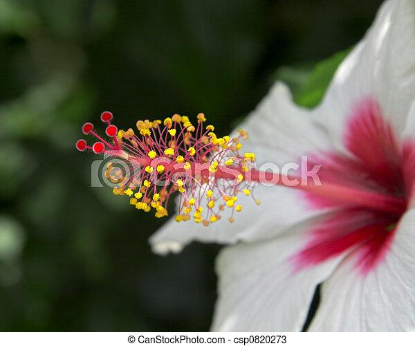 Nectar flower - csp0820273