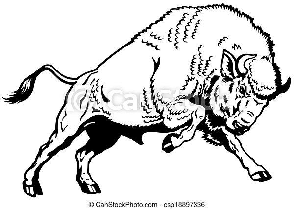 Un bisonte europeo blanco negro - csp18897336