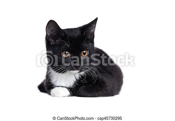 Cierra el retrato de un gatito negro de fondo blanco - csp45730295