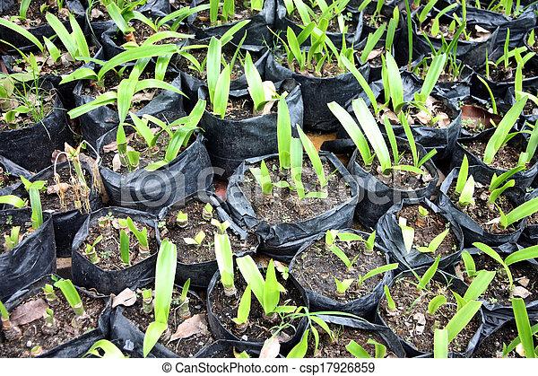 Muchas semillas crecen en la oscuridad - csp17926859