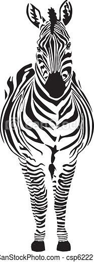 Cebra, negro y cero - csp6222145