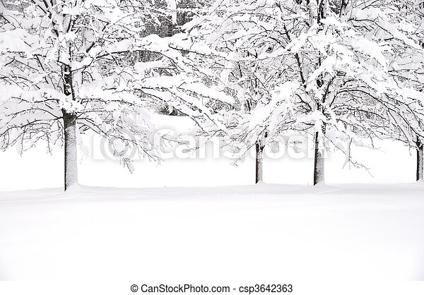 neige, arbres - csp3642363