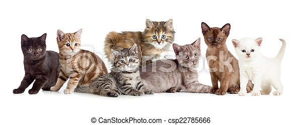 neobvyklý, devítiocasá kočka, skupina, nebo, kotě - csp22785666