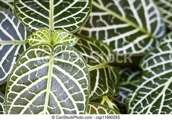 Nerve plant - csp11660255
