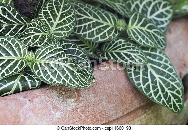 Nerve plant - csp11660193