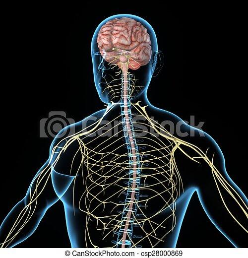 Nervensystem. Alles, satz, gehirne, wirbeltier, jedes, gehirn ...