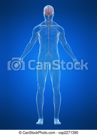 Sistema nervioso humano - csp2271390