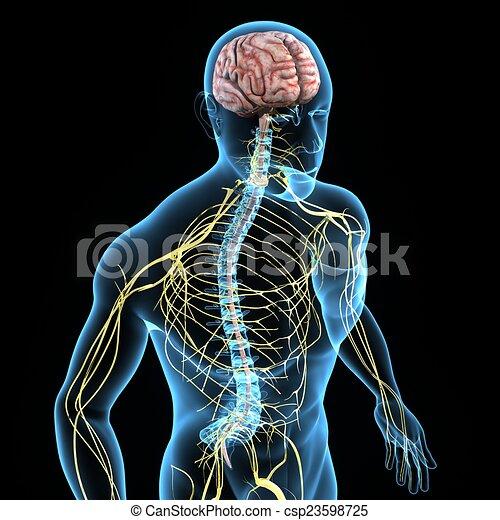 Nervous system - csp23598725
