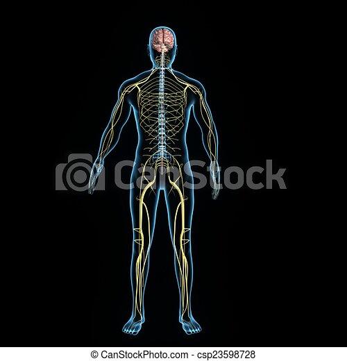 Nervous system - csp23598728