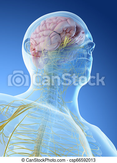 nervous system of the head and neck - csp66592013