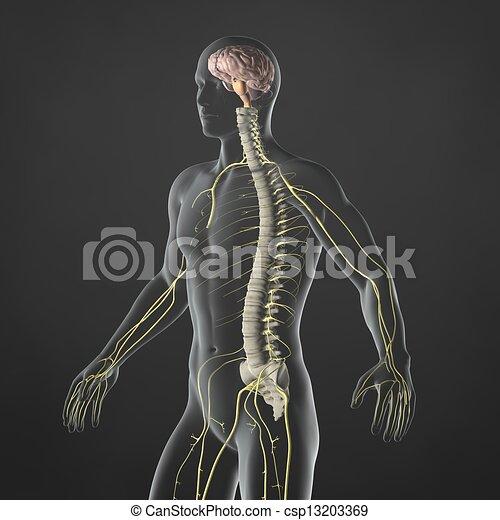 Nervous System - csp13203369