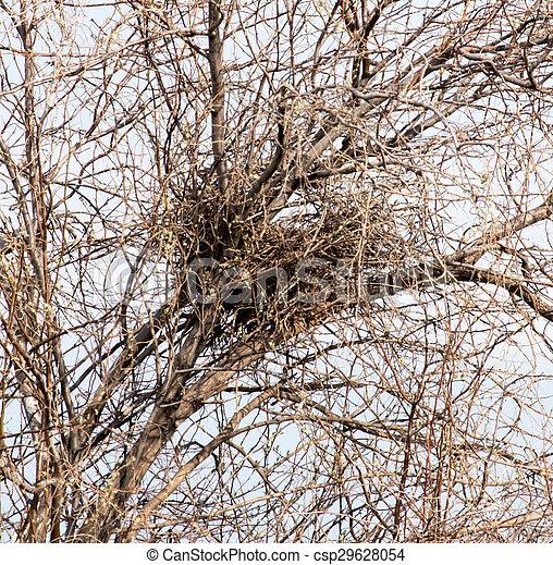 nest on a tree - csp29628054