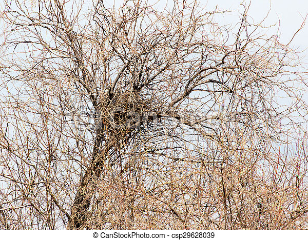 nest on a tree - csp29628039