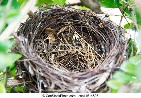 nest vogel nest baum vogel gr n zweig bl tter. Black Bedroom Furniture Sets. Home Design Ideas