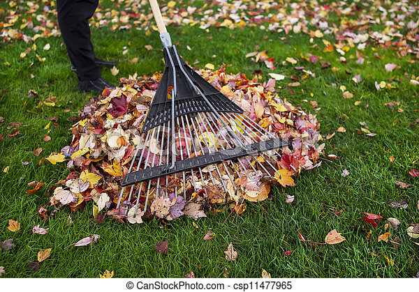 nettoyer, pendant, yard, automne - csp11477965