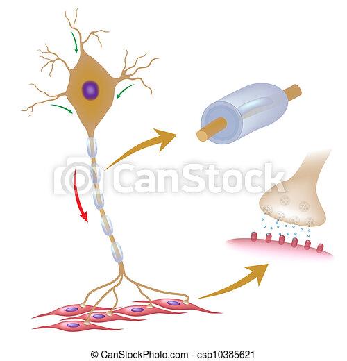 neuron, eps10, motor - csp10385621