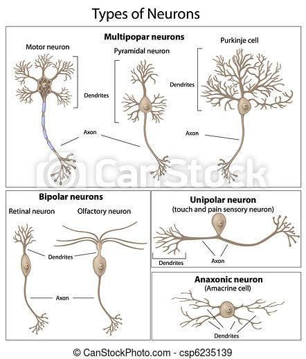neurons, slagen - csp6235139