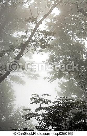 nevelig, bomen - csp0350169