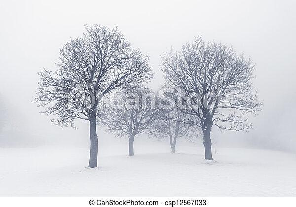 nevoeiro, árvores inverno - csp12567033