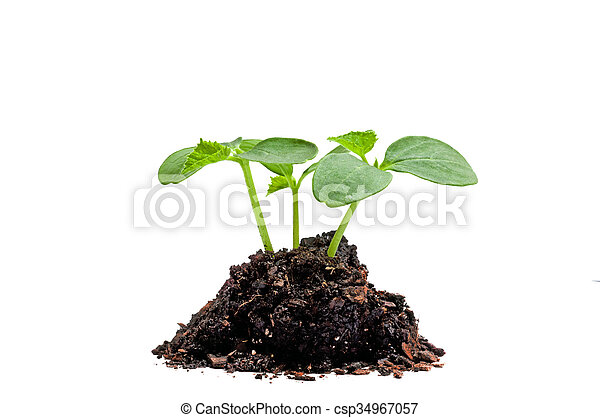 New Growth In Soil On White - csp34967057