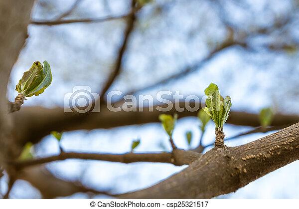 new leaf - csp25321517