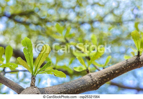 new leaf - csp25321564