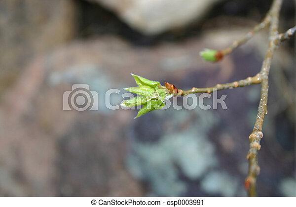 New Leaves 3959 - csp0003991