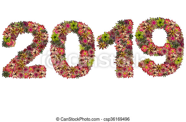 New year 2019 made from bromeliad flowers isolated on white background - csp36169496