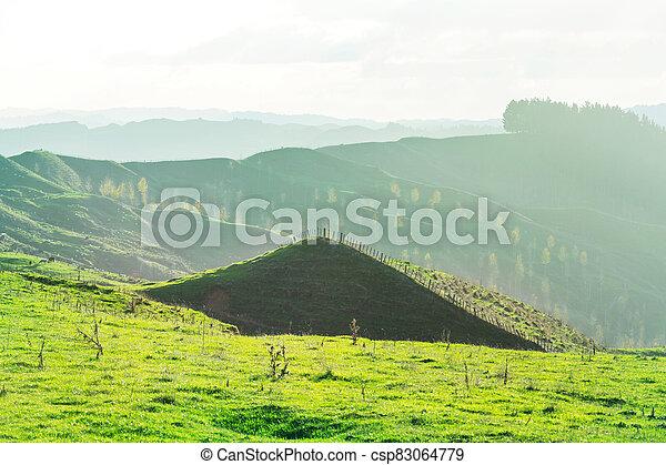 New Zealand hills - csp83064779