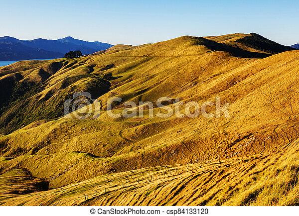 New Zealand hills - csp84133120