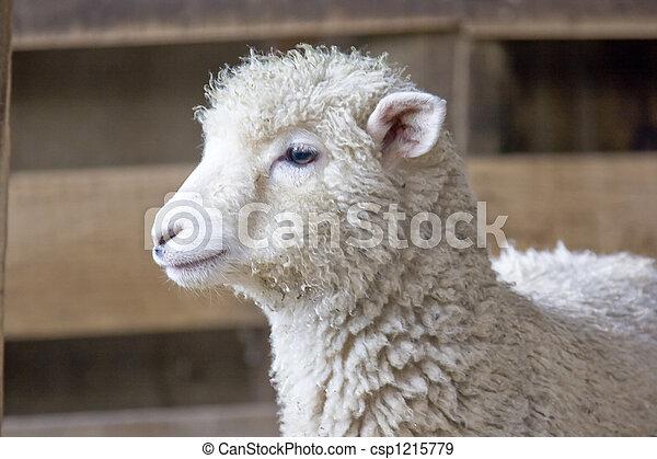New Zealand - Lamb - csp1215779