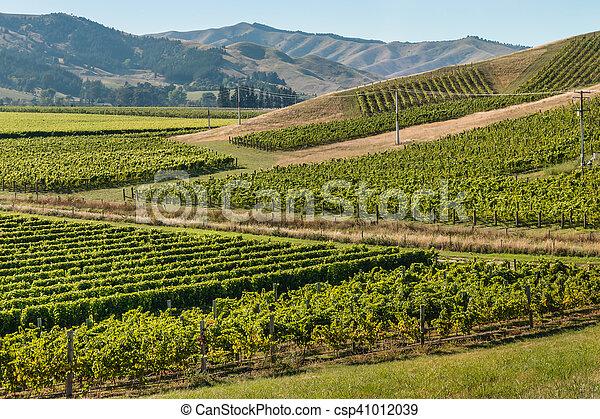 New Zealand vineyards in summertime - csp41012039