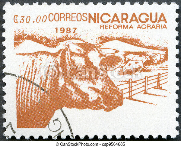 NICARAGUA - 1987: shows image of agrarian reform, Cattle - csp9564685
