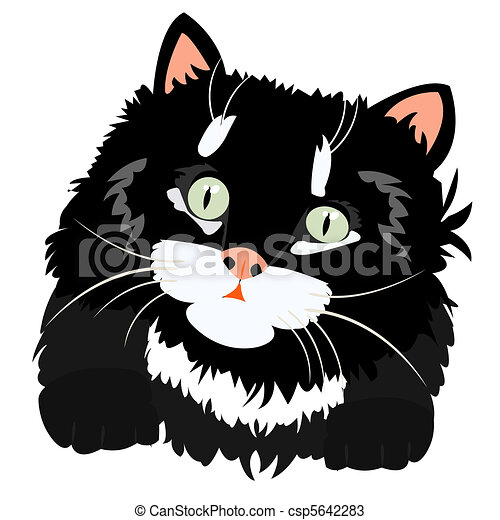 Nice black kitty on white - csp5642283
